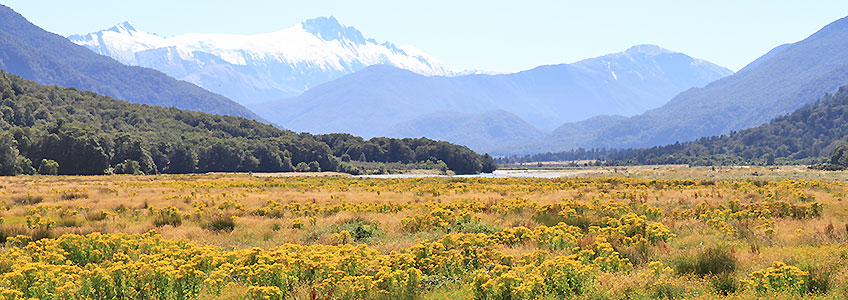 Bus Tours New Zealand Nature