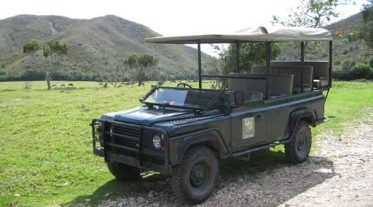 South Africa Travel, Wildlife Safari