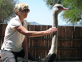 Ostrich Safari Farm, Oudtshoorn, South Africa