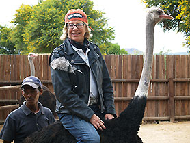 Ostrich Farm, Oudtshoorn, South Africa