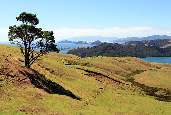 Video New Zealand